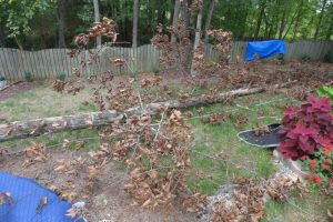 Tree Down 2 of 3
