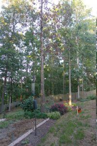 Tree & Yard